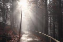 太阳发出光线在秋天装饰的森林公路 库存图片