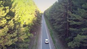 太阳发出光线轻的松树和汽车驱动沿路 影视素材