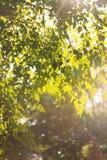 太阳叶子 免版税库存照片