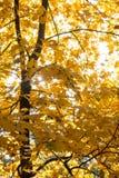 太阳和叶子在秋天森林里 库存图片