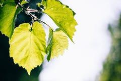 太阳和叶子 免版税库存图片