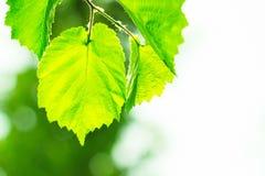 太阳和叶子 免版税库存照片