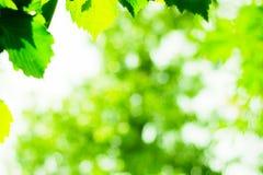 太阳和叶子 免版税图库摄影