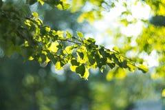 太阳和叶子 库存照片