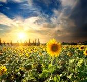 太阳和向日葵 免版税库存图片