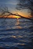太阳和树在湖 免版税库存照片