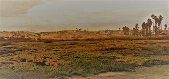 太阳和树荫在亚利桑那的美丽的沙漠 免版税库存照片