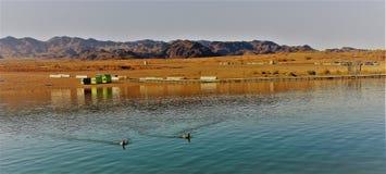太阳和树荫在亚利桑那的美丽的沙漠 图库摄影
