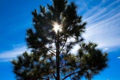 太阳和树 库存图片