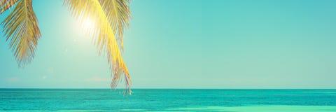 太阳和棕榈叶、天空蔚蓝、加勒比海、夏天和旅行背景 库存照片