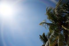 太阳和棕榈树 免版税库存照片