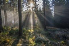 太阳和雾 免版税库存图片