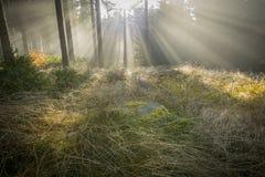 太阳和雾 免版税库存照片