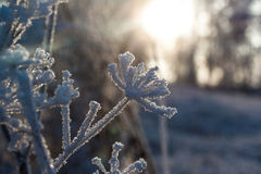 太阳和霜 免版税图库摄影