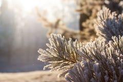 太阳和霜 免版税库存图片