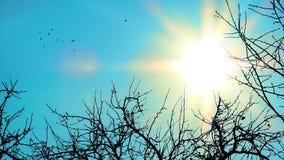 太阳和鸟 库存照片