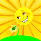 太阳和年幼植物 库存照片