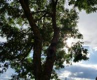 太阳和结构树 免版税库存图片