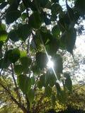 太阳和绿色 免版税库存照片