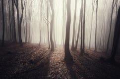太阳在一个神奇森林里在秋天发出光线低谷雾 免版税库存照片