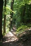 太阳在一个黑暗的森林里充斥了道路 免版税图库摄影