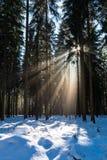 太阳在冬天森林里 免版税库存图片