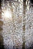 太阳在冬天森林里 图库摄影
