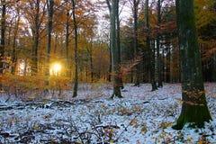 太阳在多雪的森林里 免版税图库摄影