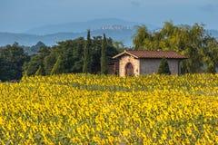 太阳在托斯卡纳风景的花田,意大利 免版税库存照片