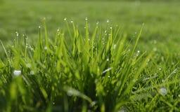 太阳在有早晨露水的绿色叶子发光 库存图片