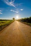 太阳在有树的一条离开的路结束时 图库摄影