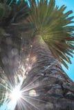太阳在棕榈树之间的火光作用 免版税库存图片