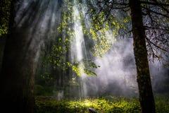 太阳在森林里飘动 库存照片