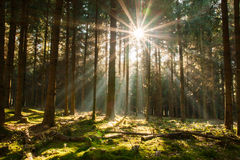 太阳在森林里 免版税库存图片