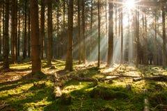 太阳在森林里 免版税库存照片