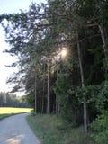 太阳在森林里 免版税图库摄影