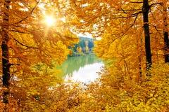 太阳在秋天森林里湖 库存照片
