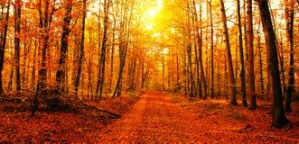 太阳在秋天森林里 库存照片