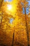 太阳在秋天森林里 库存图片