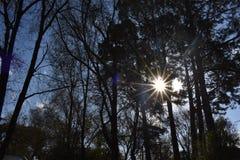 太阳在秋天 库存照片