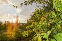 太阳在背景的夏天晚上发出光线 库存照片