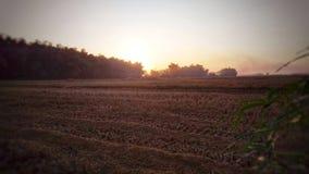 太阳在被收获的米领域升起 库存图片
