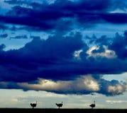 太阳在马塞人玛拉设置 免版税图库摄影