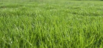 太阳在绿色叶子发光 免版税库存照片