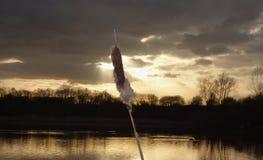 太阳射线-纸莎草-湖 库存图片