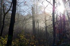太阳小河通过薄雾 免版税库存照片