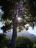 太阳山和树 库存图片