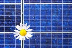 太阳延命菊的面板 免版税图库摄影