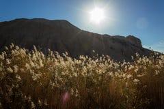 太阳强光、山和植物在沙漠 免版税库存图片