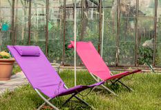 太阳懒人休息的绿草庭院 免版税图库摄影